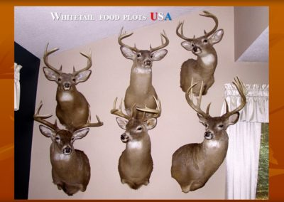 My Deer Mounts